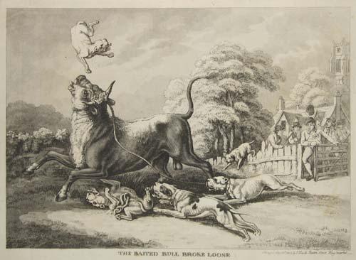 pit bull breed history pitbull